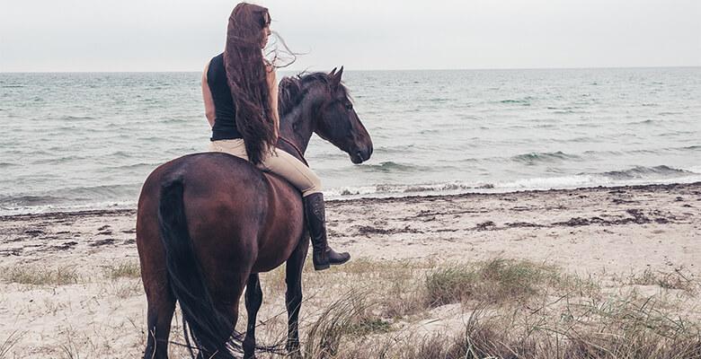 hesteTilFilm_02